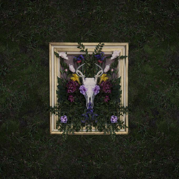 Symmetry in nature by tammyswarek