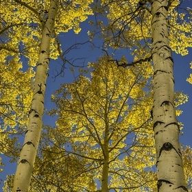 Beautiful fall colors throughtout Western Colorado.