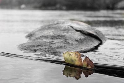 Still Waters, Still Life