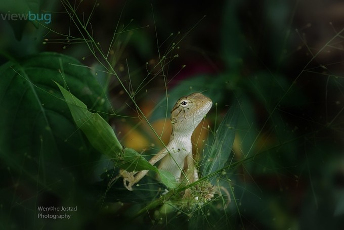 In My Garden by wenchejostad - Reptiles Photo Contest