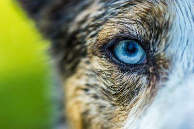 An Eye Worth Capturing
