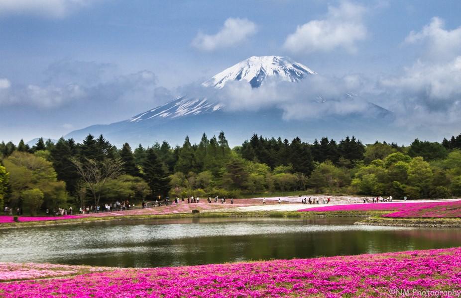 Shiba sakura festival, Mount Fuji, Japan