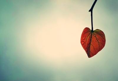 Under Leaf Rain