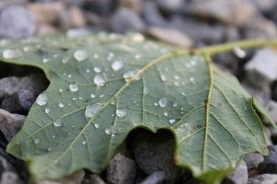 water drop leaf
