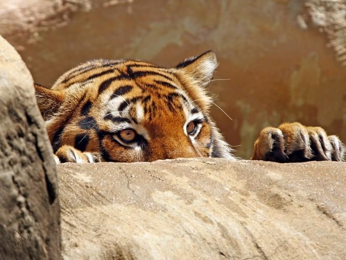 Fraidy Cat by KKGivens - Hiding Photo Contest