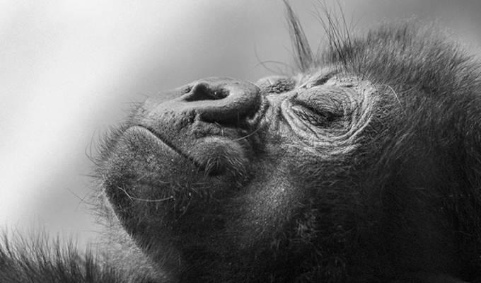 by danieldecker - Baby Animals Photo Contest