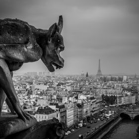 A grotesque sits atop Notre Dame Cathedral watching over the city of Paris.  See more at www.jaybirmingham.com