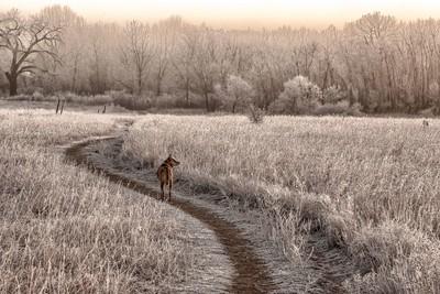 Morning Hoar Frost