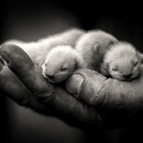 I took this shot in Germany whilst visiting family a couple of years back. I thought the detail in the hand and in the faces of the baby ferrets ...