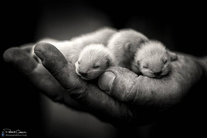 A Fistful of Kits by petergreig - Textures In Black And White Photo Contest