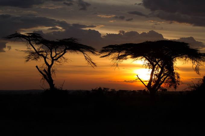 Umbrella Acacias in the Serengeti by LeeBennett - Dark And Bright Photo Contest