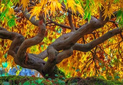 Autumn Light (Close Up)