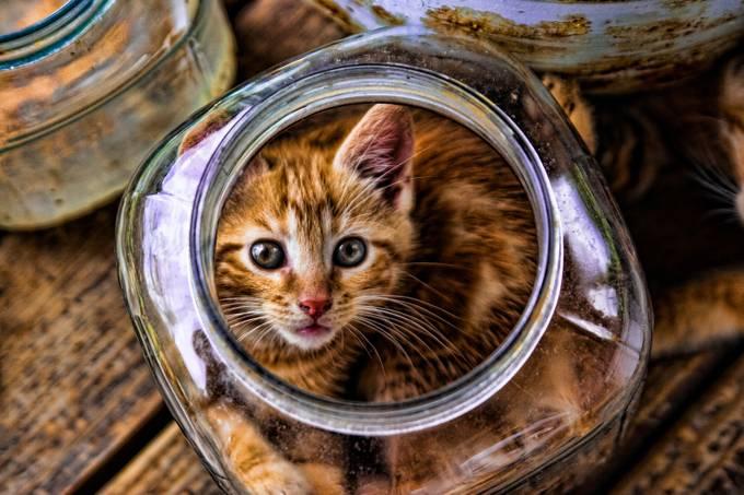 Kitten in a Jar by genelinzy - Baby Animals Photo Contest