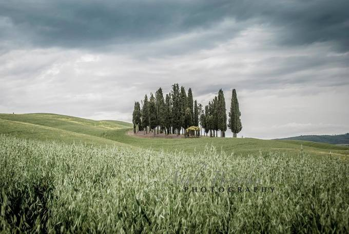 Tuscany Rolls by ashlibrookephotography - Meadows Photo Contest