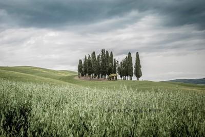 Tuscany Rolls