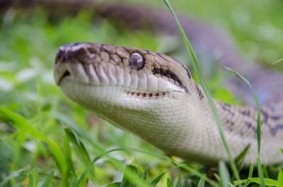 snakes n lizards78 (37)