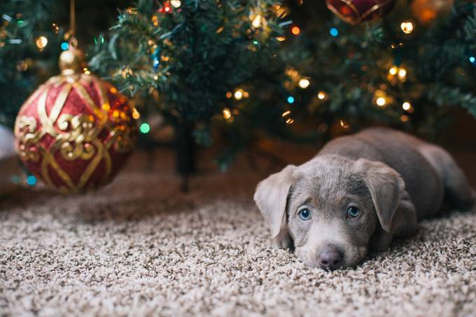 20140110-IMG_4245 by meganletich - Baby Animals Photo Contest