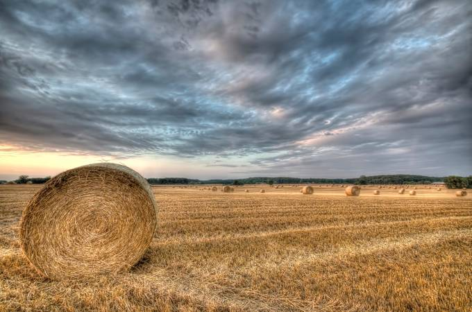 Bales of Hay by kimschou - Dry Fields Photo Contest