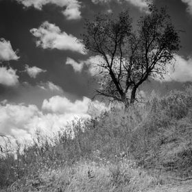 A black and white shot of a black tree on hillside with a cloudy sky.
