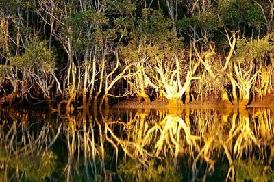 creek daybreak911