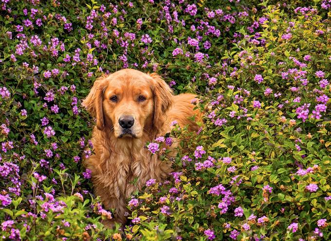 The Flower Girl by FrankSomma - Pets With Character Photo Contest