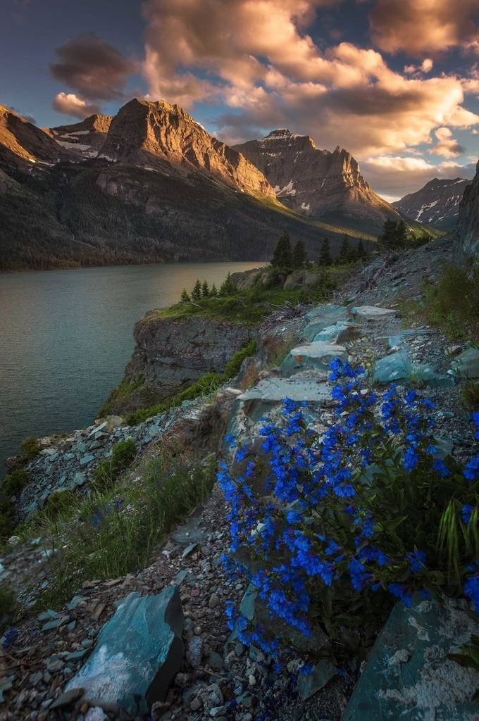 glacier-NP-flowers1 by kyleames - The Tourist Photo Contest