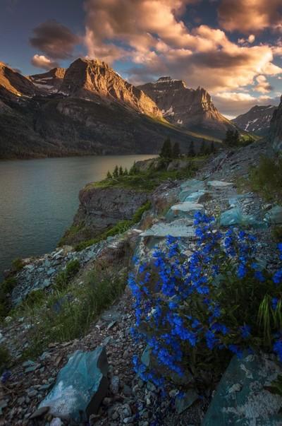 glacier-NP-flowers1