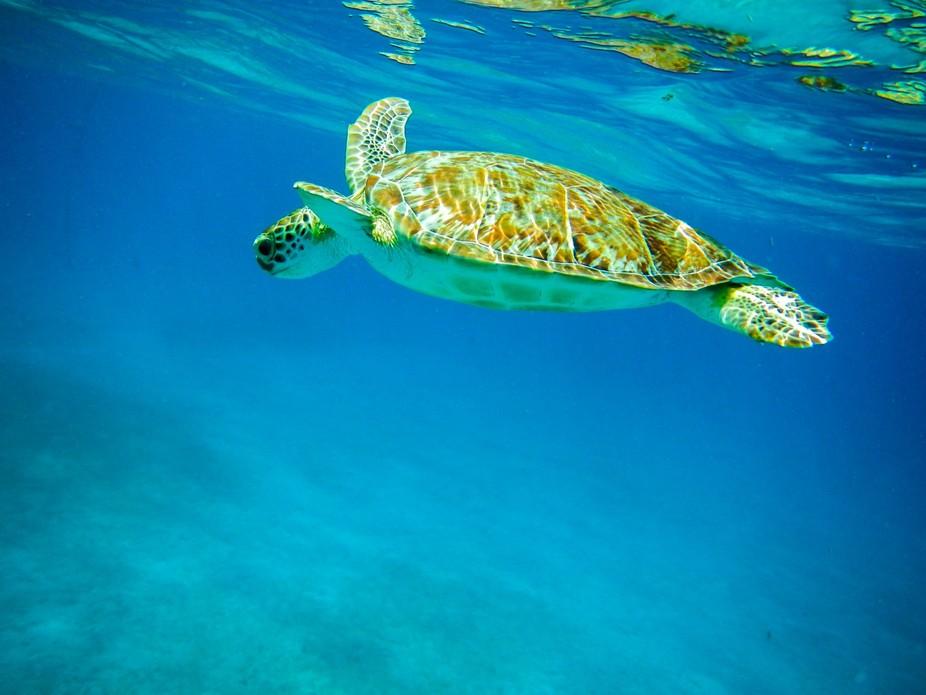 Turtle Cove USVI