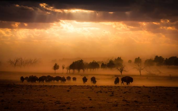 Dust Storm by lanatolle - Wind In Nature Photo Contest