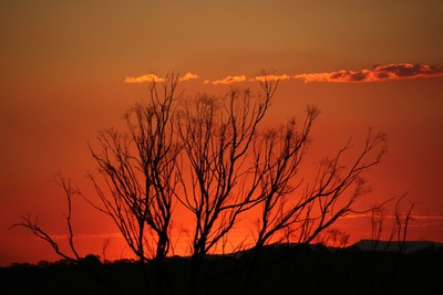 QLD Sunset (G)