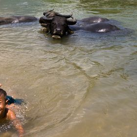 Child enjoys a break from the heat in a local river while looking after a herd of water buffalo in Vietnam norther foothills.