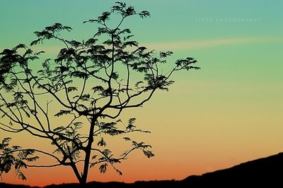 Colorful sunset beyond lonely tree