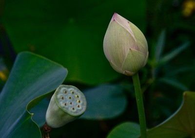Lilly and Pod