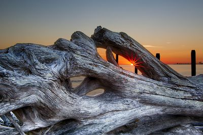 Lighthouse Marine Park Tree Trunk Sunset