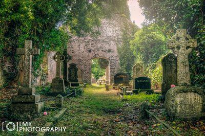 The graveyard..