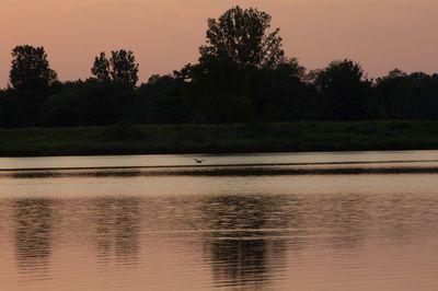 lake shades