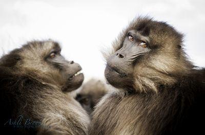 Ehit (Sisters)    Simien Mtns, Ethiopia