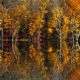 Fall patterns and dead trees reflected in the lake at Hewitt, NJ.