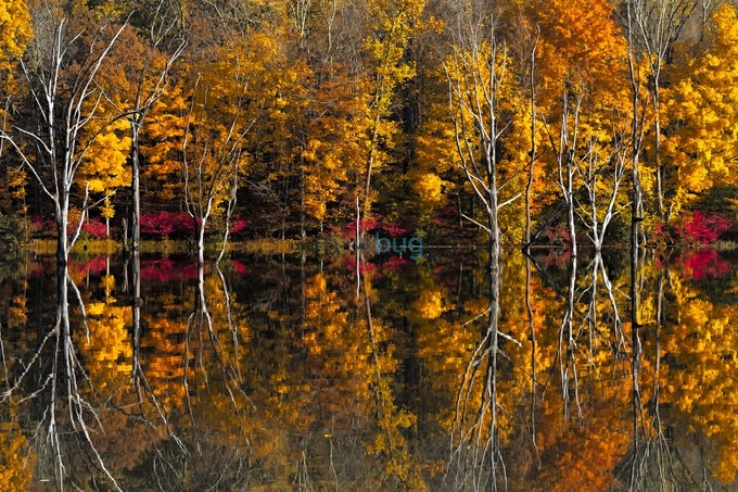 Fall reflections by EduardMoldoveanu