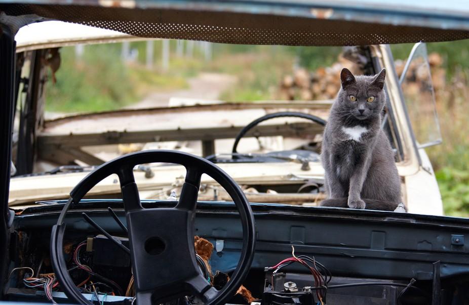- горе-автомобилист
