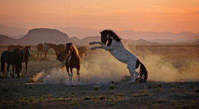 Dust Photo Contest Winners