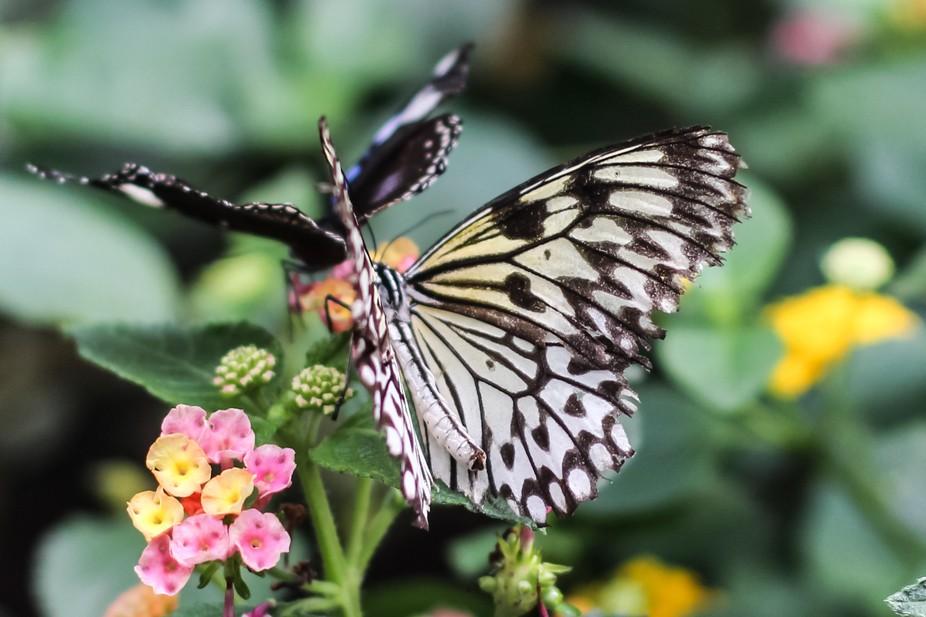Sensational butterflies expo - NHM London