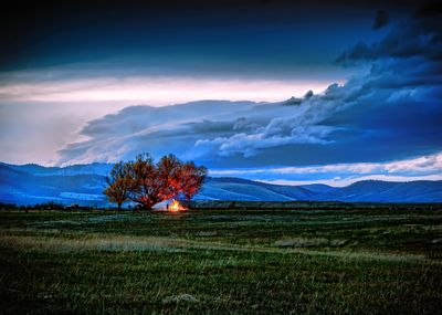 Fire Under the Old Tree