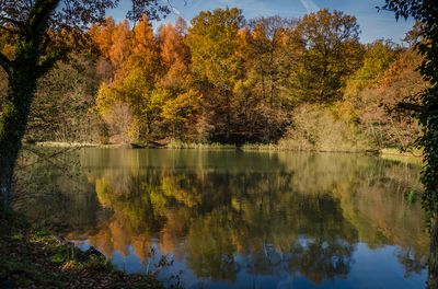 Autumn at the ponds