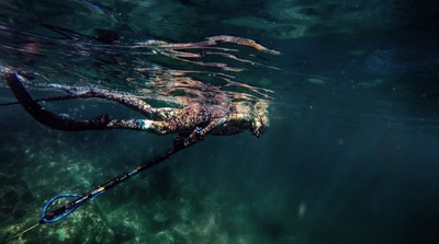Me Spearfishing in Fujairah, UAE