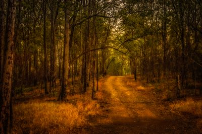 Pathway into the Bush