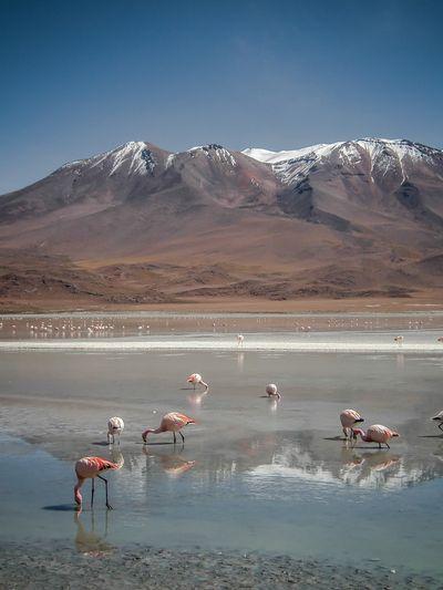 Bolivia-Salar de uyuni