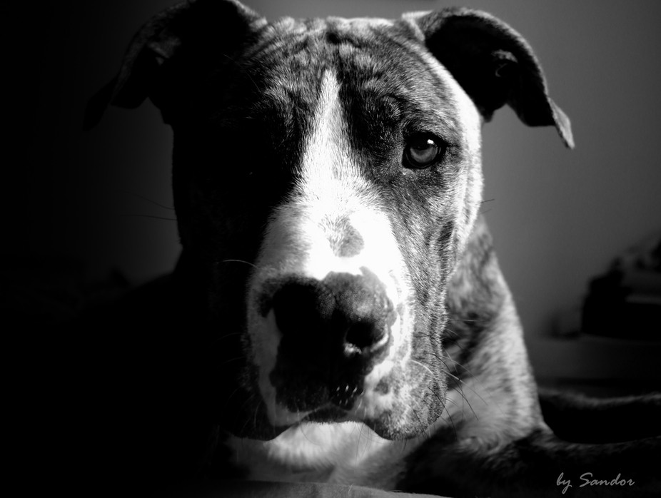 this photo was took of my second dog. He\'s name Alex and he\'s a 8 mounts old crossed dog I really...