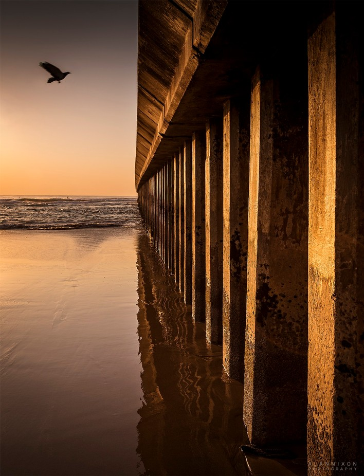 PIER & Bird by Alannixon - Clever Angles Photo Contest