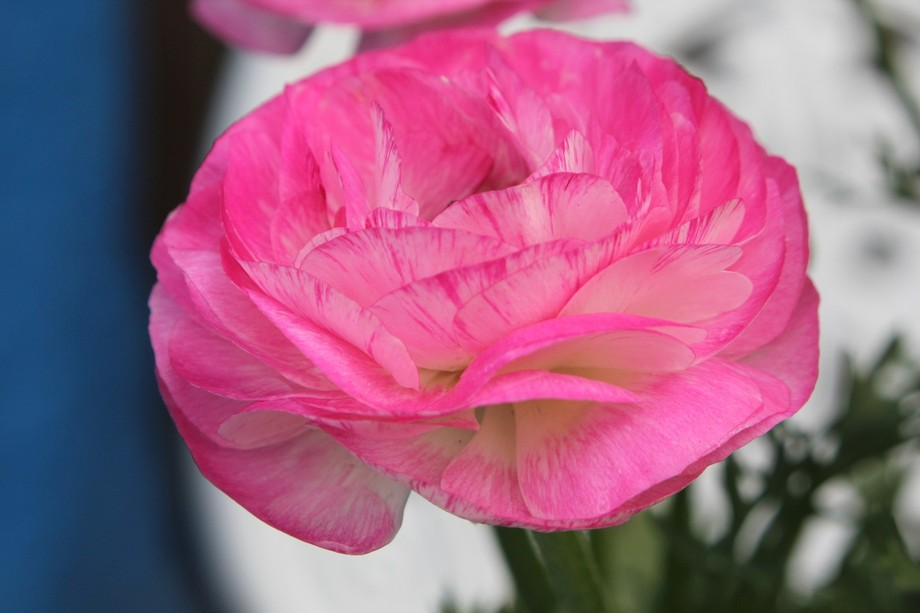 Beautiful flower in full bloom.